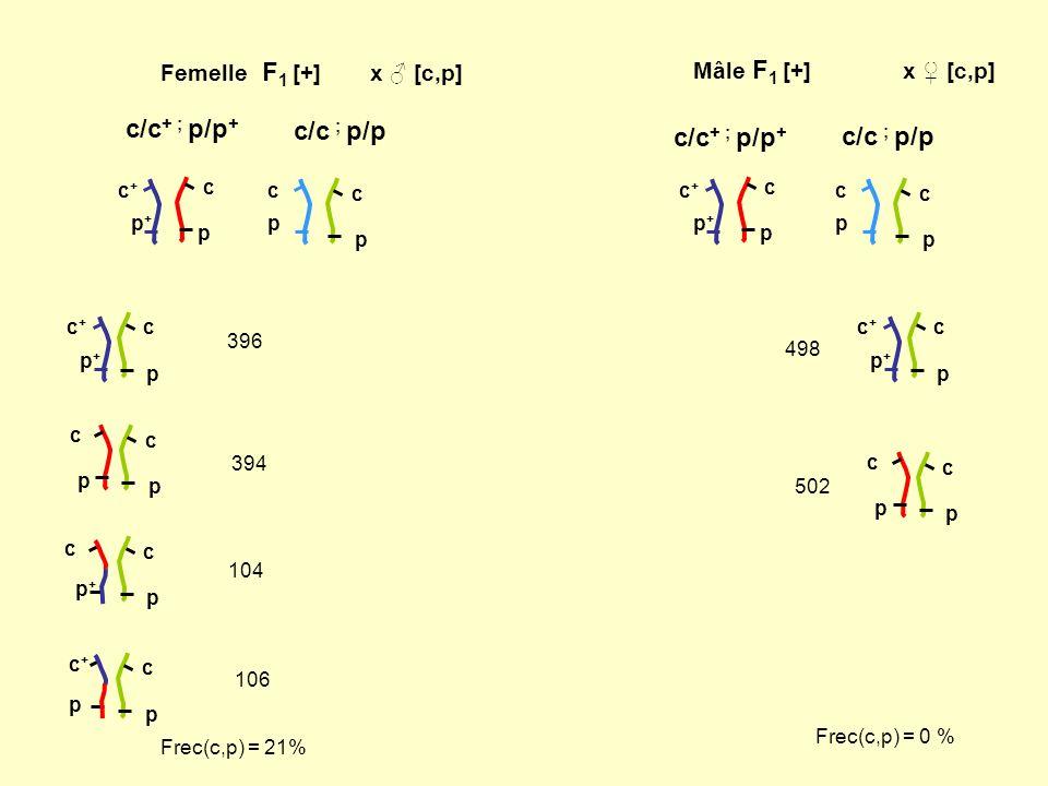 c/c+ ; p/p+ c/c ; p/p c/c+ ; p/p+ c/c ; p/p Femelle F1 [+] x ♂ [c,p]